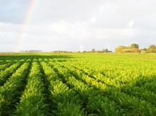Gemüsevermarktung